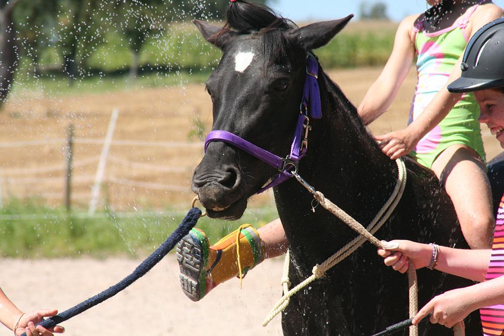 """Ponyworkshop """"Ponysommer"""" - ausgebucht"""