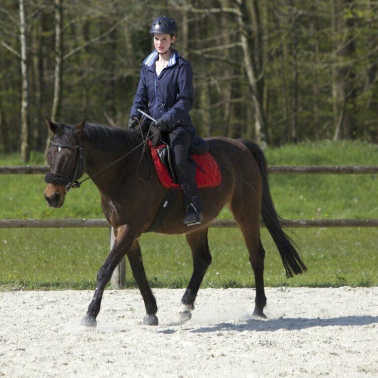 Pferd und Reiter in Balance mit Sandra Prem und Fiorina Scholz